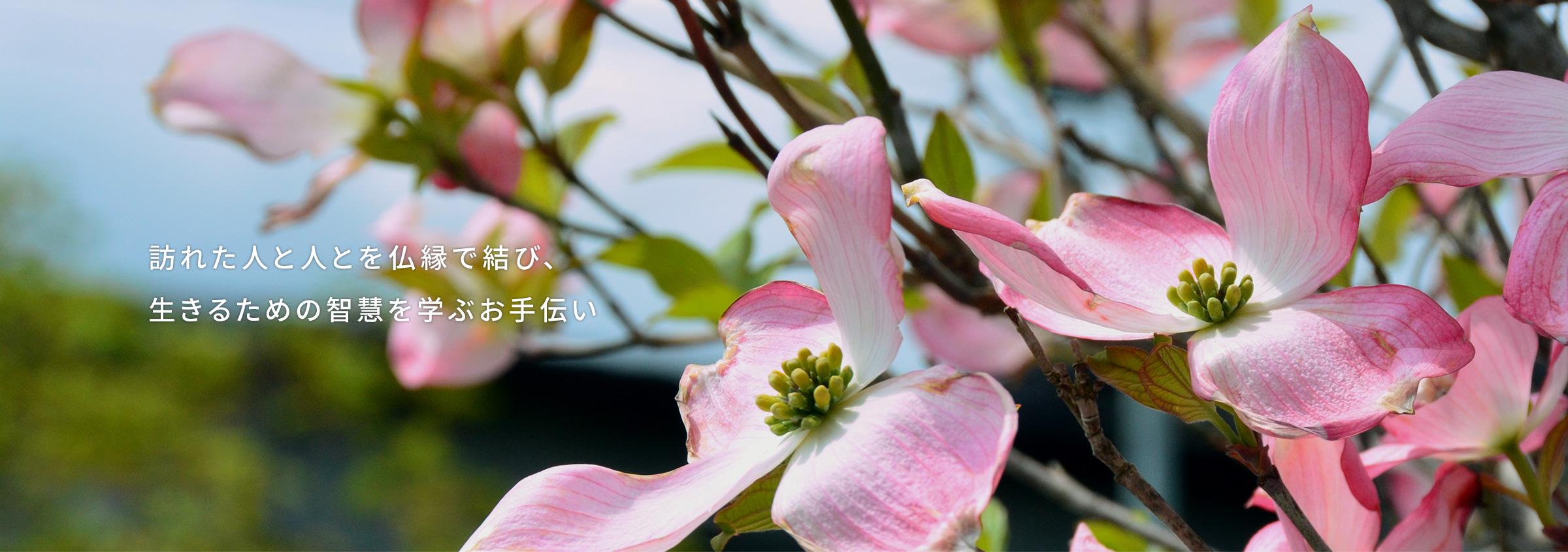 青森県 美しい花樹に囲まれた専求院の「樹木永代供養墓」